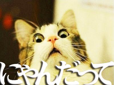 にゃんだって!.jpg